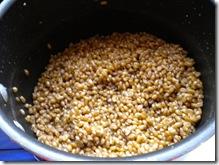 soaked wheat berreis