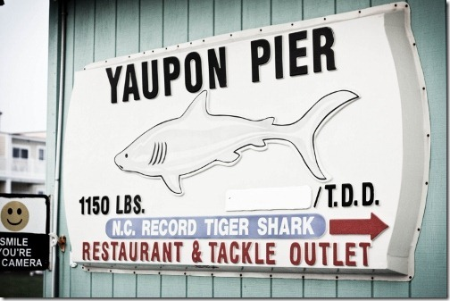 yaupon pier home of the nc tiger shark record